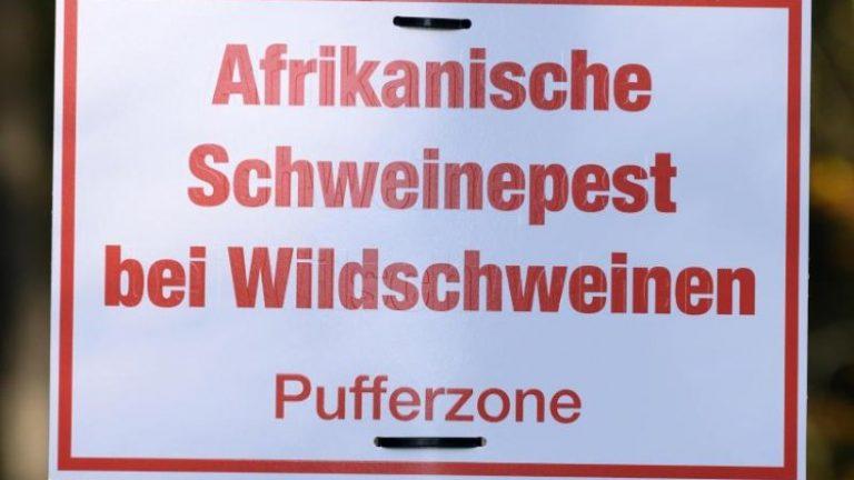 444 مورد تب خوکی آفریقایی: 42 یافته جدید