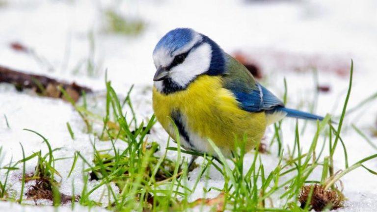 نابو از براندنبورگ خواست تا پرندگان زمستانی را بشمارد